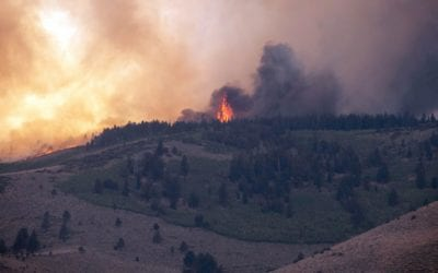 2020 Colorado Fires their Impact on the Cannabis Industry